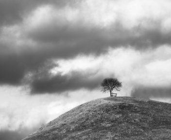 11-landscapes